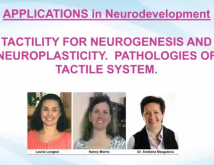 Applications In NeuroDevelopment Tactility For Neurogenesis And Neuroplasticity Pathologies Of Tactile System